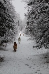 Dog Heaven - Freedom and Snow