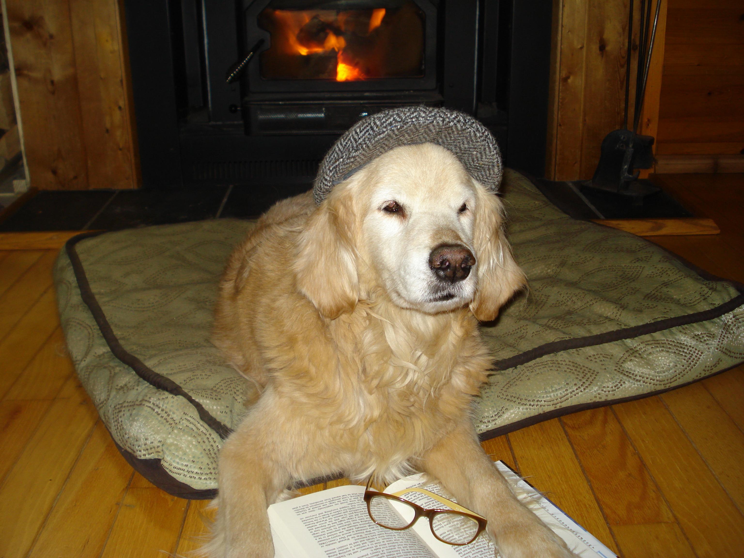 Therapy Dog Training Alaska